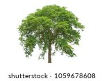 tree isolated on white... | Shutterstock . vector #1059678608