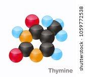 thymine  t. purine nucleobase... | Shutterstock .eps vector #1059772538