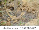 chameleon lizard in nature... | Shutterstock . vector #1059788492