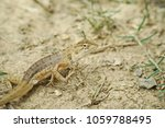 chameleon lizard in nature... | Shutterstock . vector #1059788495