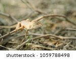 chameleon lizard in nature... | Shutterstock . vector #1059788498