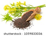 canola seeds and fresh canola... | Shutterstock . vector #1059833036