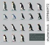 set of flat geometric species...