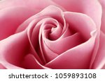 close up view of a beautiful... | Shutterstock . vector #1059893108