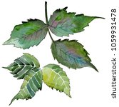 blackberry leaves in a... | Shutterstock . vector #1059931478