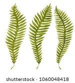green watercolor fern leaves... | Shutterstock . vector #1060048418