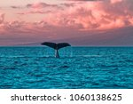 Humback Whale Fluke During A...