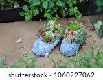 planting succulent plants | Shutterstock . vector #1060227062