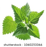 nettle or urtica leaves... | Shutterstock . vector #1060253366