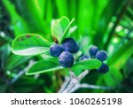 decorative bush with blue... | Shutterstock . vector #1060265198