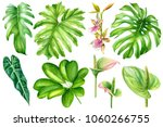 set tropical plants  palm... | Shutterstock . vector #1060266755