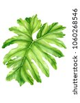 tropical plants  palm leaves ... | Shutterstock . vector #1060268546