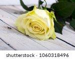 bright white yellow rose on... | Shutterstock . vector #1060318496