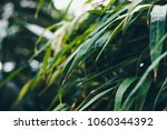 bush  bush in the garden ... | Shutterstock . vector #1060344392