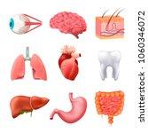 human internal organs anatomy... | Shutterstock .eps vector #1060346072