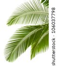 Leaves Of Palm Tree  Isolated...