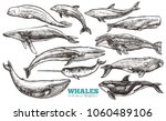 whales sketch set. big... | Shutterstock .eps vector #1060489106
