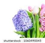 hyacinth pink and blue hyacinth ...   Shutterstock . vector #1060490045