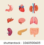set of realistic human cartoon... | Shutterstock .eps vector #1060500605