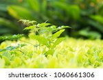 close up shot with selective... | Shutterstock . vector #1060661306