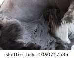 closeup view of the felted hair ... | Shutterstock . vector #1060717535
