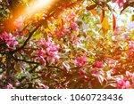 beautiful spring flowers...   Shutterstock . vector #1060723436