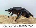 giraffe stag beetle  ...   Shutterstock . vector #1060742066