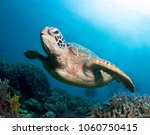 Small photo of Sea turtle close up over coral reef in blue sea.