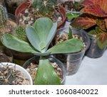 Beautiful Leafy Succulent...