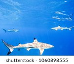 sharks swimming in bora bora... | Shutterstock . vector #1060898555