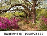 pathway through beautiful...   Shutterstock . vector #1060926686