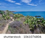 Small photo of Wild growing prickly peer cacti, which belong to opuntia cacti at a beach in front of the blue Atlantic ocean and the interesting coastline of Portugal