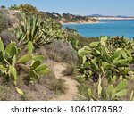 Small photo of Wild growing prickly peer cacti and agave cacti at a beach with dunes in the Algarve region of Portugal