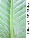 leaves of cotyledons | Shutterstock . vector #1061100395