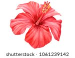 flower hibiscus  watercolor... | Shutterstock . vector #1061239142