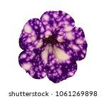 single flower isolated on white ... | Shutterstock . vector #1061269898