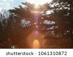 flowers and trees in the sun ... | Shutterstock . vector #1061310872