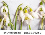 spring snowdrop flowers on... | Shutterstock . vector #1061324252
