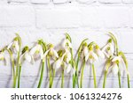 spring snowdrop flowers on... | Shutterstock . vector #1061324276