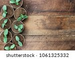 cucumber plants in seedling... | Shutterstock . vector #1061325332