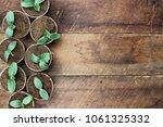 cucumber plants in seedling... | Shutterstock . vector #1061325332