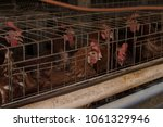 production of eggs with hens... | Shutterstock . vector #1061329946