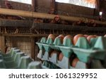 production of eggs with hens... | Shutterstock . vector #1061329952