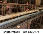 production of eggs with hens... | Shutterstock . vector #1061329976