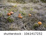 Small Brown Mushrooms In A...