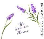 the lavender wreath with... | Shutterstock .eps vector #1061452718