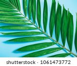 tropical summer flatlay and... | Shutterstock . vector #1061473772