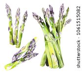 watercolor asparagus hand drawn ...   Shutterstock . vector #1061515082