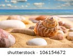 Close Up Of Sea Shell On The...