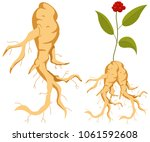 ginseng root with leaves and... | Shutterstock .eps vector #1061592608